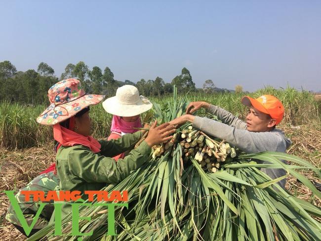 Xã Nà Bó gìn giữ và phát huy tốt các tiêu chí nông thôn mới - Ảnh 5.
