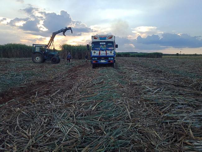 TTC Sugar tăng giá thu mua, nông dân trồng mía phấn khởi - Ảnh 4.