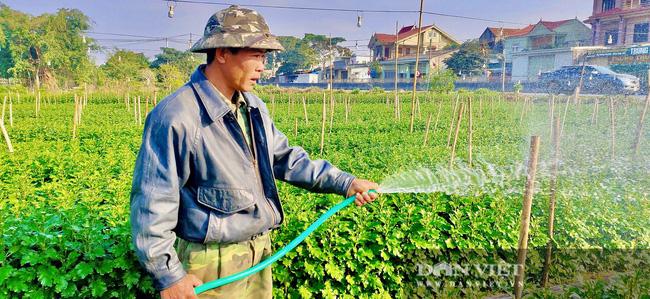 Nông dân Nghệ An tất bật chăm sóc hoa Tết - Ảnh 1.