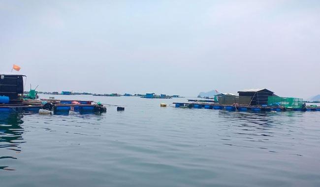 Phú Yên: Tháng nào trong năm 2021 sẽ là thời hạn chót chấm dứt nuôi trồng thủy sản trên vịnh Vũng Rô? - Ảnh 1.