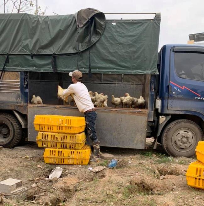 """Giá gia cầm hôm nay 20/1: Gà, vịt mỗi nơi một giá, người nuôi lao đao vì khó tìm """"lái ruột"""" - Ảnh 1."""