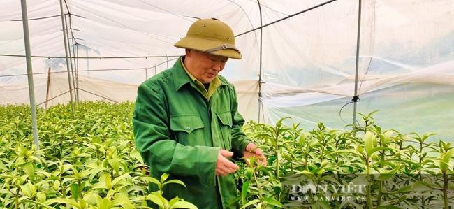 Nông dân Nghệ An tất bật chăm sóc hoa Tết - Ảnh 5.