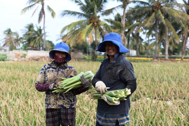 Ninh Thuận: Nông sản liên tục tăng giá, nông dân phấn khởi đón tết - Ảnh 4.
