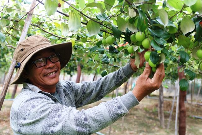 Ninh Thuận: Nông sản liên tục tăng giá, nông dân phấn khởi đón tết - Ảnh 6.
