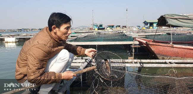 Tìm nguyên nhân vụ hàng tấn cá song, cá giò chết bất thường ở Quảng Ninh - Ảnh 1.