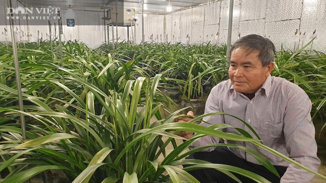Nam Định: Địa lan quý giá chục triệu mỗi chậu, sợ hết, khách đến tận vườn ghi tên đánh dấu - Ảnh 2.