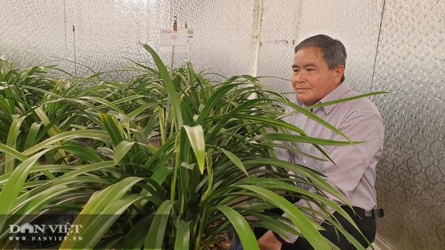 Nam Định: Địa lan quý giá chục triệu mỗi chậu, sợ hết, khách đến tận vườn ghi tên đánh dấu - Ảnh 4.