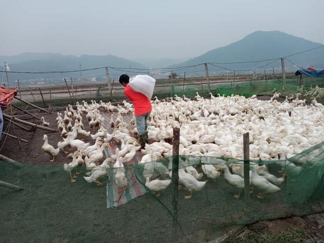 Giá gia cầm hôm nay 24/1: Cập nhật giá gà, vịt mới nhất tại các vùng - Ảnh 1.