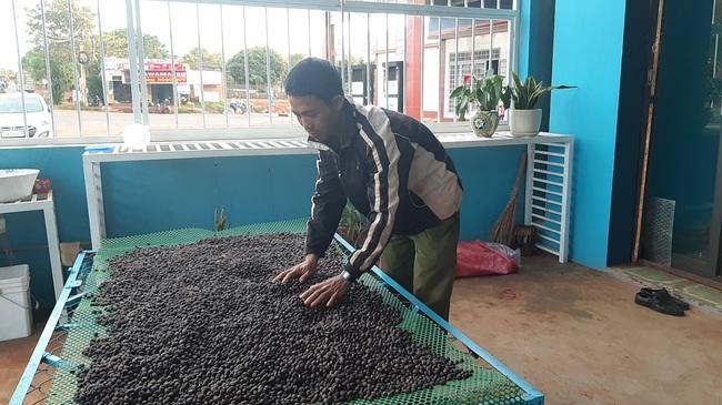 Nông dân bắt tay nâng giá  trị hạt cà phê  - Ảnh 2.