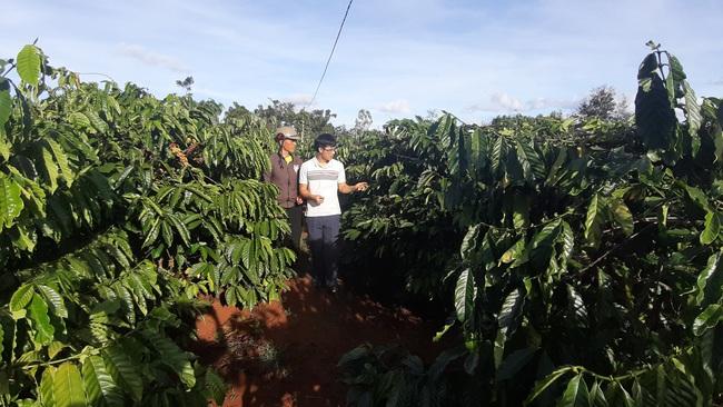 Nông dân bắt tay nâng giá  trị hạt cà phê  - Ảnh 1.