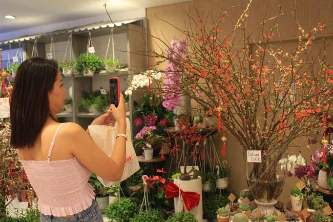 Đào Hà Nội chưa về, nhà giàu Sài Gòn mua đào Sakura nhập khẩu tiền triệu chơi Tết - Ảnh 1.