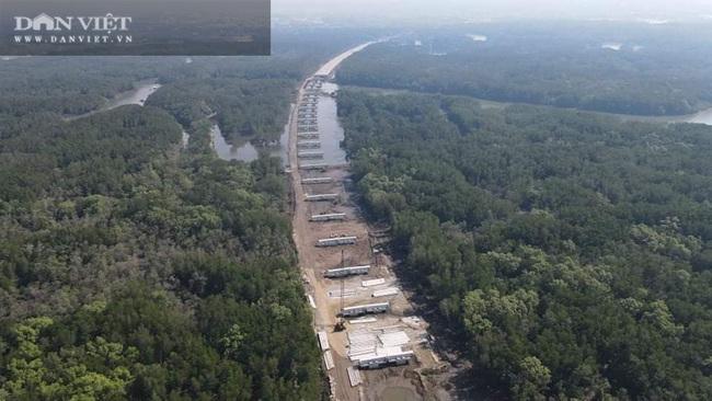 Cận cảnh thi công cao tốc Bến Lức – Long Thành xuyên rừng ngập mặn - Ảnh 3.