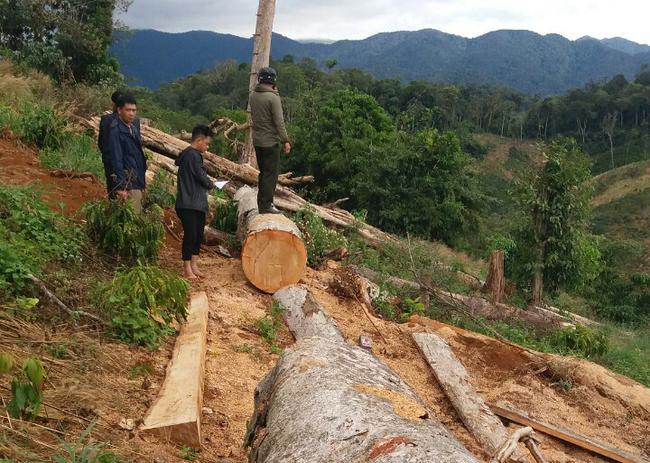 Kiểm tra nhà dân và tiểu khu 388, phát hiện gần 4m3 gỗ không rõ nguồn gốc - Ảnh 1.