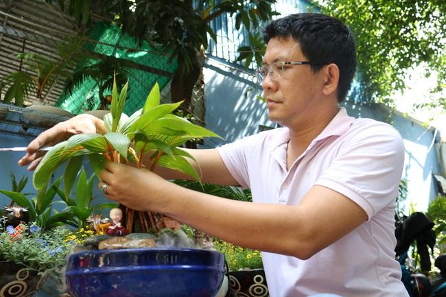 Độc đáo bonsai dừa có hình trâu đón Tết Tân Sửu 2021 tại TP.HCM - Ảnh 1.