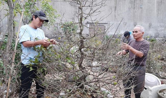 Lai Châu: Một xã trồng 400.000 chậu địa lan quý hiếm, Tết này chỉ bán 500 chậu, giá 1 chậu địa lan bao nhiêu triệu? - Ảnh 10.
