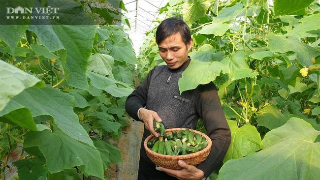 Anh nông dân sịn sò: Ngồi nhà bấm điện thoại chăm vườn dưa baby bán Tết, kiếm tiền triệu mỗi ngày  - Ảnh 5.
