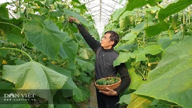 Anh nông dân sịn sò: Ngồi nhà bấm điện thoại chăm vườn dưa baby bán Tết, kiếm tiền triệu mỗi ngày  - Ảnh 2.