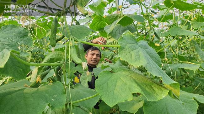 Anh nông dân sịn sò: Ngồi nhà bấm điện thoại chăm vườn dưa baby bán Tết, kiếm tiền triệu mỗi ngày  - Ảnh 4.