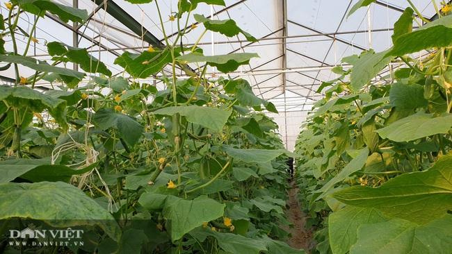 Anh nông dân sịn sò: Ngồi nhà bấm điện thoại chăm vườn dưa baby bán Tết, kiếm tiền triệu mỗi ngày  - Ảnh 3.