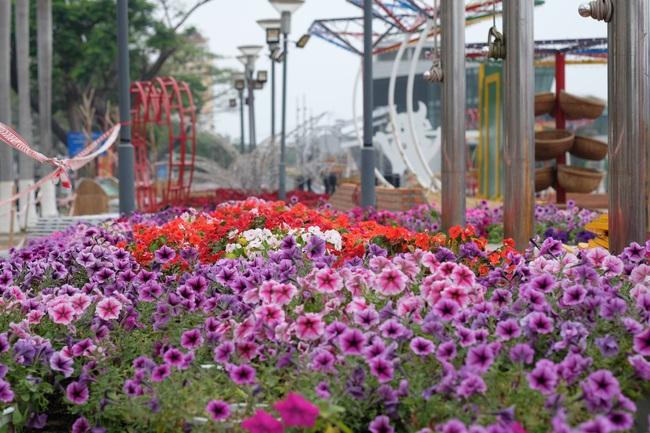 Cận cảnh đường hoa phục vụ Tết Nguyên đán hơn 10 tỷ đồng tại Đà Nẵng - Ảnh 6.