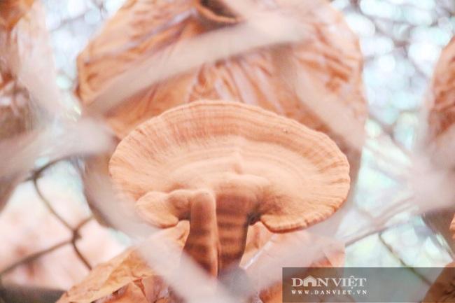 Hà Tĩnh: Loài cây dinh dưỡng được trồng từ phế thải nông nghiệp, chủ nhân lãi nửa tỷ đồng/năm - Ảnh 6.