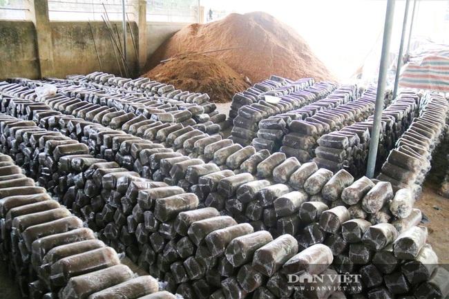 Hà Tĩnh: Loài cây dinh dưỡng được trồng từ phế thải nông nghiệp, chủ nhân lãi nửa tỷ đồng/năm - Ảnh 7.
