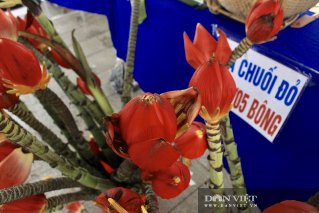 Độc, lạ: Người Sài Gòn mua hoa chuối, cành cà phê về chơi tết - Ảnh 3.