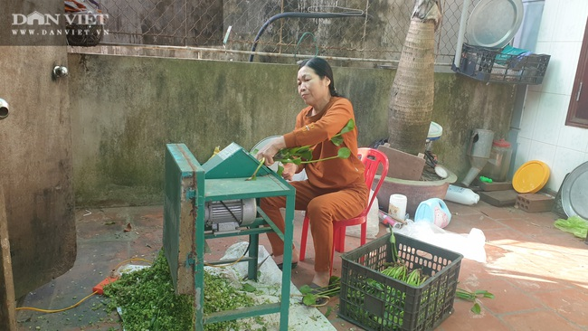 """Nam Định: Nuôi chim """"tiến Vua"""" bán Tết đắt như tôm tươi, tháng cuối năm bỏ túi cả trăm triệu đồng - Ảnh 5."""