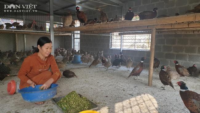 """Nam Định: Nuôi chim """"tiến Vua"""" bán Tết đắt như tôm tươi, tháng cuối năm bỏ túi cả trăm triệu đồng - Ảnh 3."""