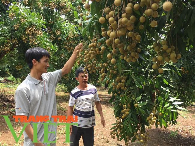Hội nông dân Mai Sơn: Cầm tay chỉ việc, giúp nông dân làm giàu - Ảnh 6.