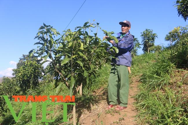 Hội nông dân Mai Sơn: Cầm tay chỉ việc, giúp nông dân làm giàu - Ảnh 5.