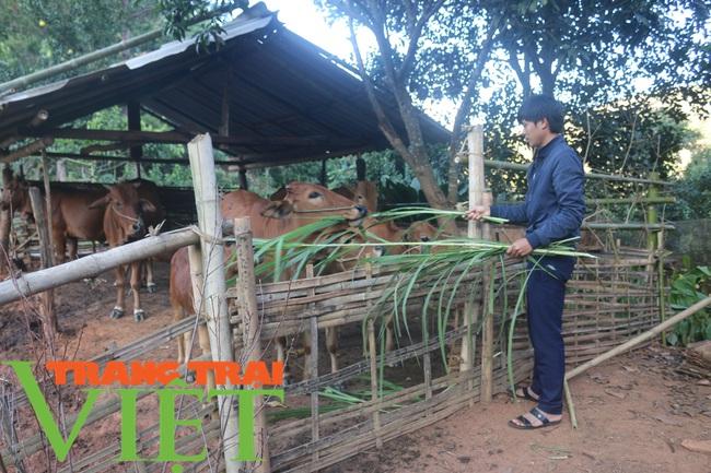 Hội nông dân Mai Sơn: Cầm tay chỉ việc, giúp nông dân làm giàu - Ảnh 4.