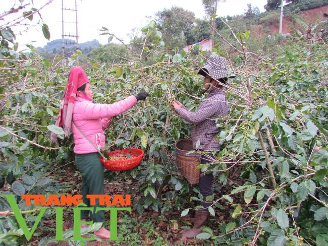 Hội nông dân Mai Sơn: Cầm tay chỉ việc, giúp nông dân làm giàu - Ảnh 2.