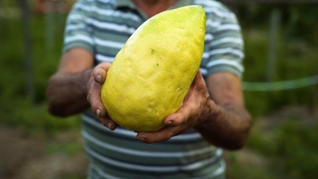 Thanh yên - thứ trái cây quý giá bậc nhất đối với cộng đồng người Do Thái - Ảnh 2.