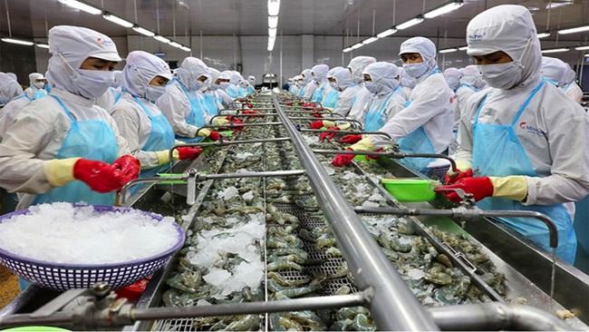 'Vua tôm' Minh Phú: Đang thiếu hụt tôm nguyên liệu gay gắt, nhà máy của tôi ở Hậu Giang chỉ hoạt động 50% công suất - Ảnh 2.