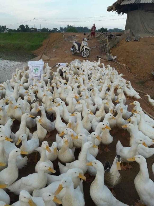 Giá gia cầm hôm nay 8/1: Chuyên gia hiến kế hay giúp người nuôi gà, vịt vượt khó - Ảnh 1.