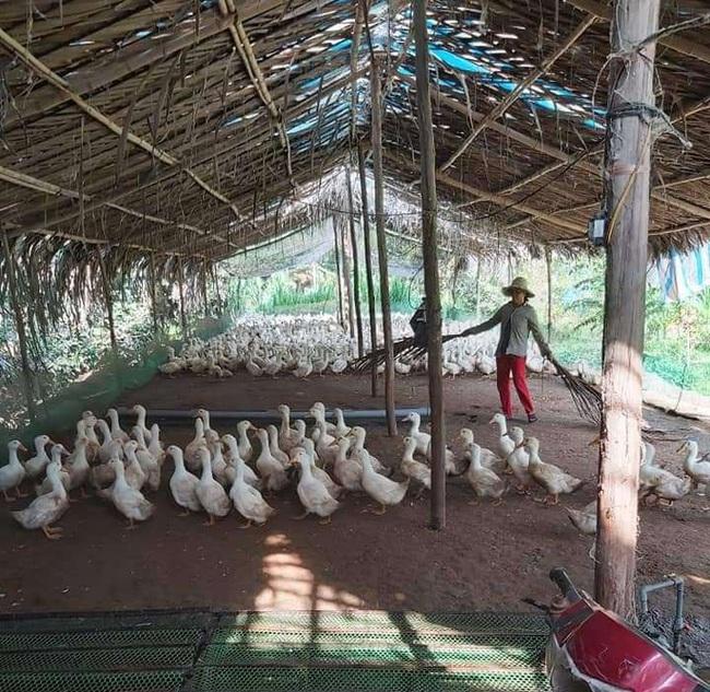 Giá gia cầm hôm nay 7/1: Cập nhật giá gà, vịt mới nhất tại các vùng - Ảnh 1.