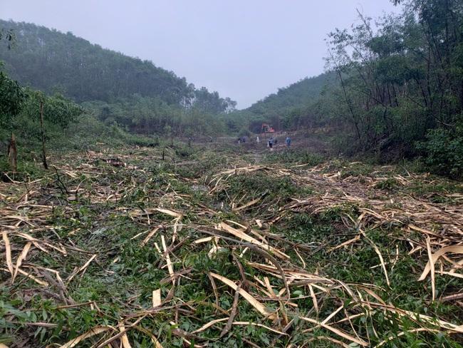 TT-Huế: Chính quyền lập hàng chục biên bản, vụ chặt phá rừng trồng vẫn tiếp diễn  - Ảnh 3.