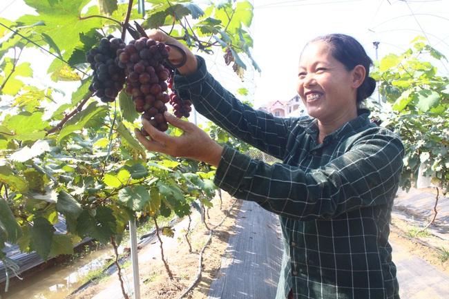 Hơn 12.000 hội viên, nông dân Thủ đô được tiếp vốn - Ảnh 1.