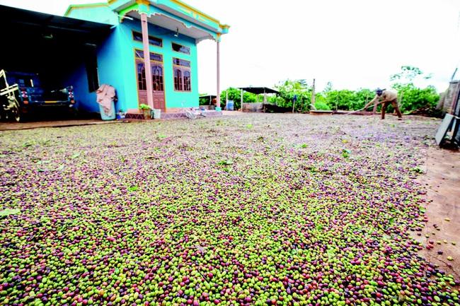 Việt Nam sẽ lọt top 15 nước nông nghiệp mạnh nhất thế giới? - Ảnh 1.