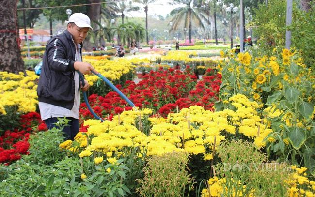 Các loại hoa nền nếu không tiêu thụ được sẽ tạo thành áp lực cho việc vệ sinh, dọn dẹp phố phường trong thời gian ngắn, sau trưa 30 tết