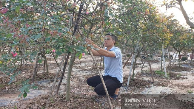 Ninh Bình: Trồng đào, hồng cổ bán Tết, 9x Kim Sơn rủng rỉnh tiền tiêu.   - Ảnh 7.