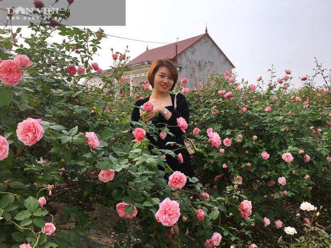 Ninh Bình: Trồng đào, hồng cổ bán Tết, 9x Kim Sơn rủng rỉnh tiền tiêu.   - Ảnh 8.