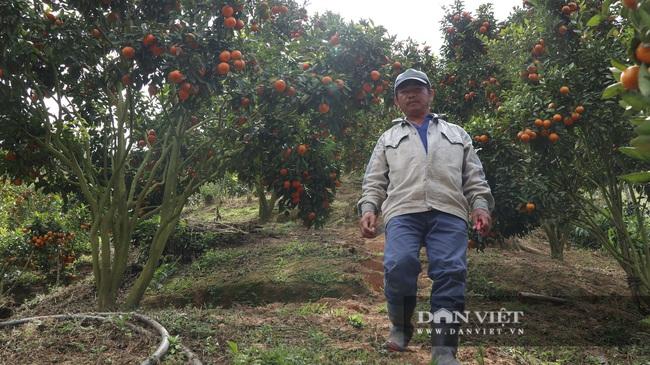 Sau một trận bão, lão nông U50 chuyển qua trồng quýt, mỗi năm lãi hơn 200 triệu đồng - Ảnh 4.