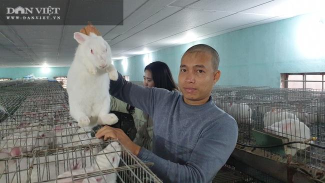 Thái Bình: Đầu năm cho thỏ nghe nhạc trữ tình, 8x kiếm đều đặn 40 triệu/tháng. - Ảnh 2.