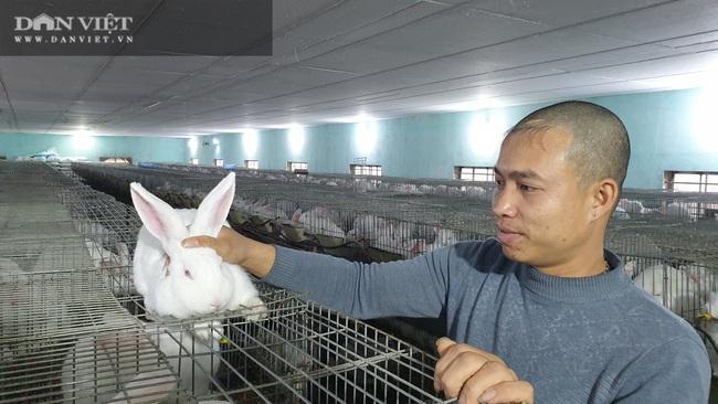 Thái Bình: Đầu năm cho thỏ nghe nhạc trữ tình, 8x kiếm đều đặn 40 triệu/tháng. - Ảnh 6.