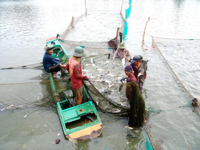 Tanien/ Khởi sắc đời sống làng quê Sài thành - Ảnh 1.