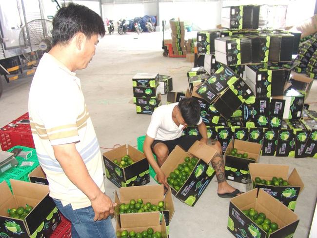 """""""Thủ phủ chanh"""" xuất khẩu 15.000 tấn chanh sạch sang thị trường khó tính mỗi năm - Ảnh 3."""
