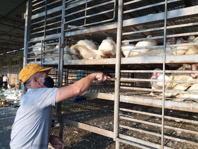 Giá gia cầm hôm nay 19/2: Cập nhật giá gà, vịt mới nhất tại chợ đầu mối và các vùng - Ảnh 3.