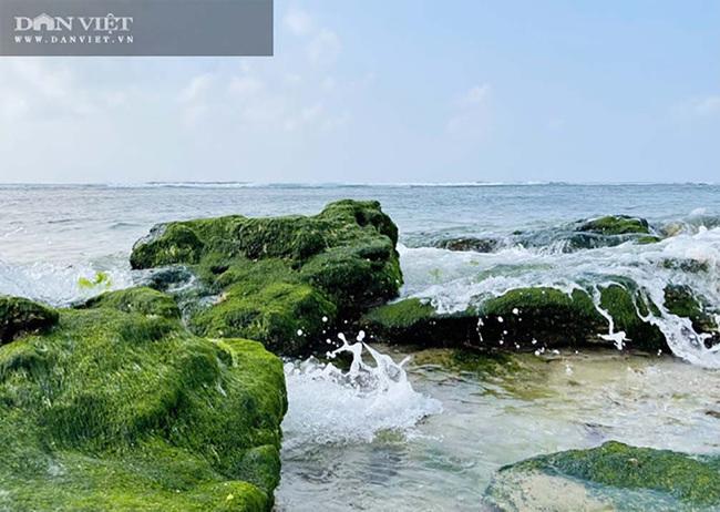 Du lịch sau Tết: Mê hoặc rêu xanh nơi sóng tự tình với đá ở đảo Lý Sơn   - Ảnh 3.